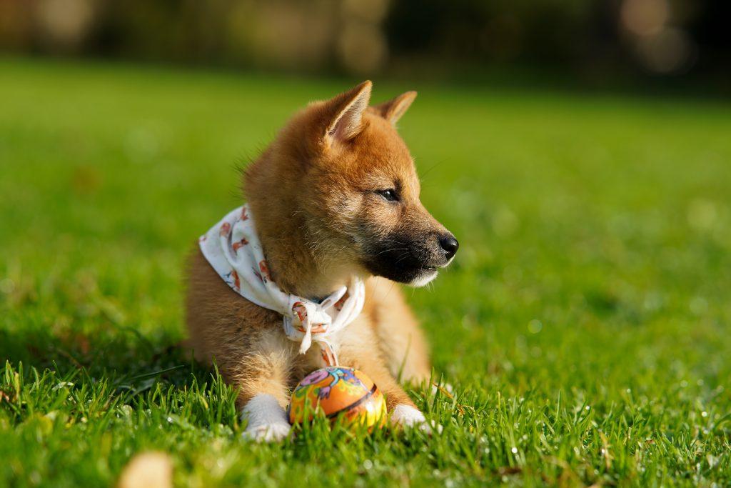 Poop Scoop - All Dogs Poop Services