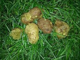 Dog Poop Green