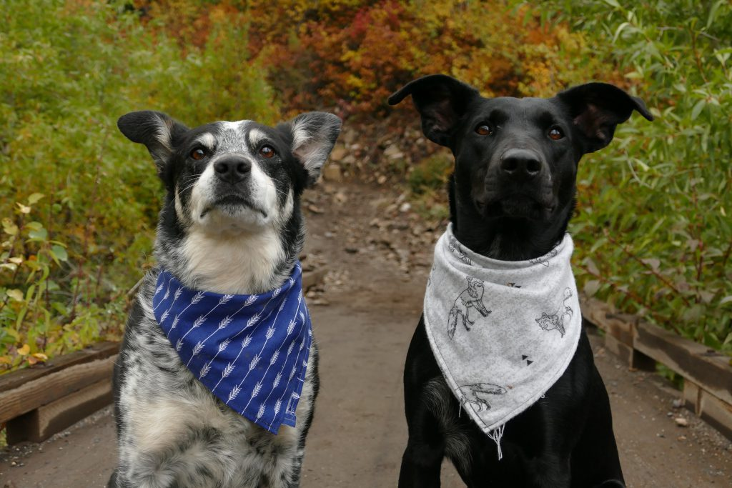 Dog Waste Removal Services South NJ